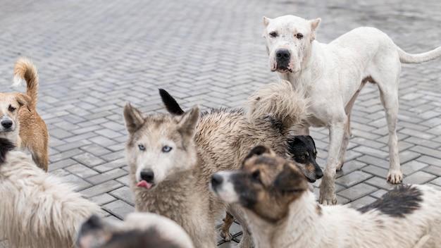 Muchos perros rescatados en un refugio esperando ser adoptados