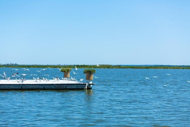 Muelle en la orilla del río. una gran bandada de gaviotas. día de verano.