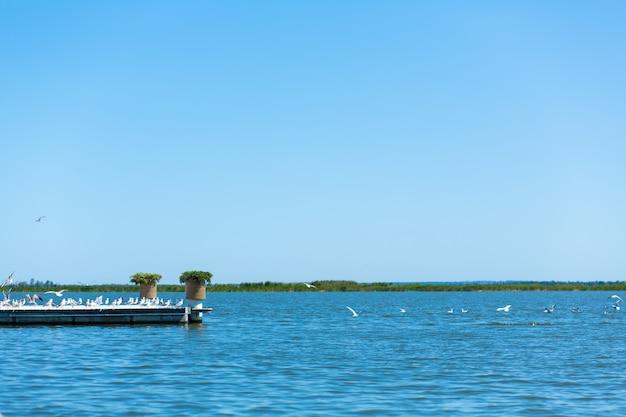 Muelle en la orilla del río. una gran bandada de gaviotas.