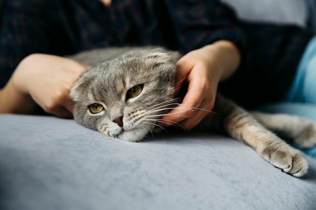 Mujer acariciando adorable gato perezoso