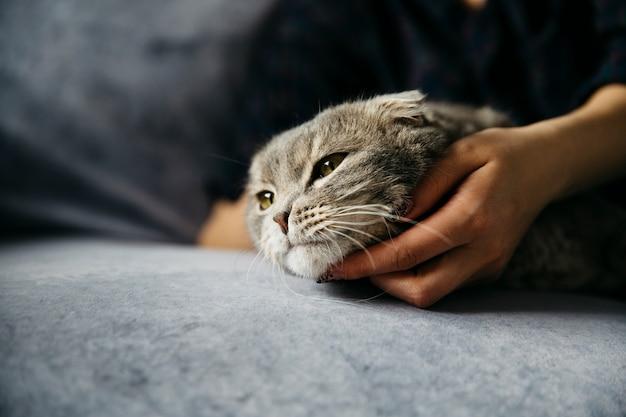 Mujer acariciando lindo gato perezoso