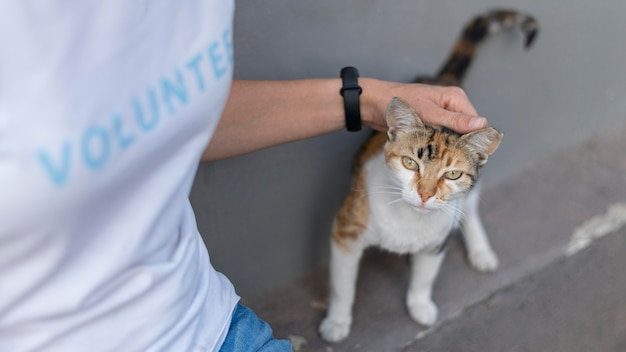 Mujer acariciando lindo gato de rescate