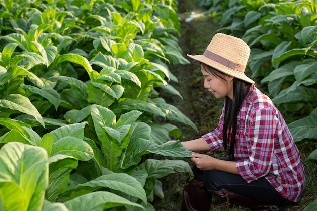 Mujer agricultora ve tabaco en el campo.