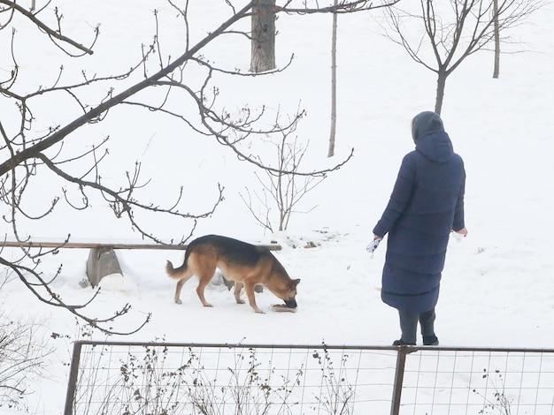 Mujer alimenta perro sin hogar comiendo comida en la calle en invierno, primer plano