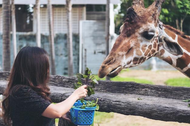 Mujer alimentando a una jirafa