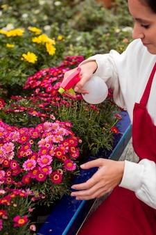 Mujer de alto ángulo rociando flores en invernadero