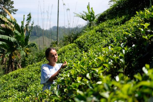 Mujer asiática joven en plantaciones de té de alta montaña en un día soleado brillante.
