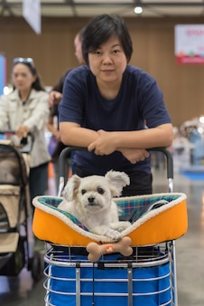 Mujer asiática y el perro en sala de exposiciones o exposición.