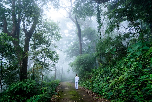 Mujer caminando meditación vipassana en un tranquilo bosque de niebla