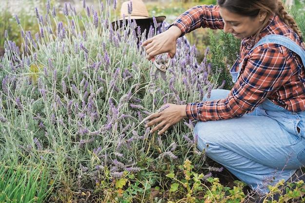 Mujer campesina hispana que trabaja en invernadero mientras recoge lavanda - centrarse en manos de mujer