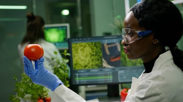 Mujer científica africana mirando el tomate mientras su colega escribiendo la prueba de adn en la computadora en segundo plano.