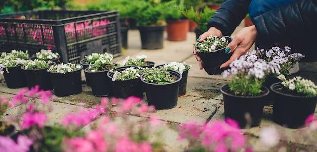 Mujer comprando plantas en macetas en el mercado de las flores