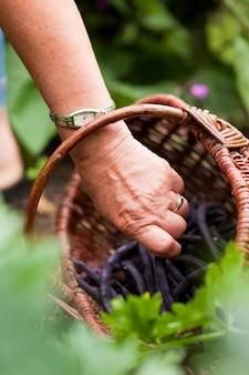 Mujer cosechando pepinos en su jardín