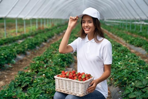Mujer en cuclillas está recogiendo fresas en invernadero