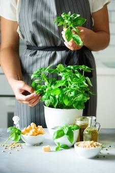 Mujer en delantal de estilo con pote con albahaca orgánica fresca
