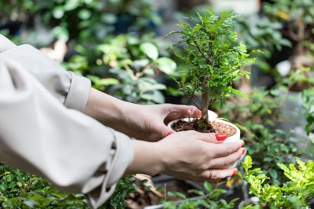 Mujer eligiendo plantas en macetas: árbol bonsai decorativo en una maceta para su hogar / apartamento en la tienda de jardinería, vivero