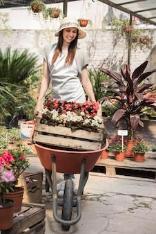 Mujer feliz que lleva la flor en el cajón dentro de la carretilla