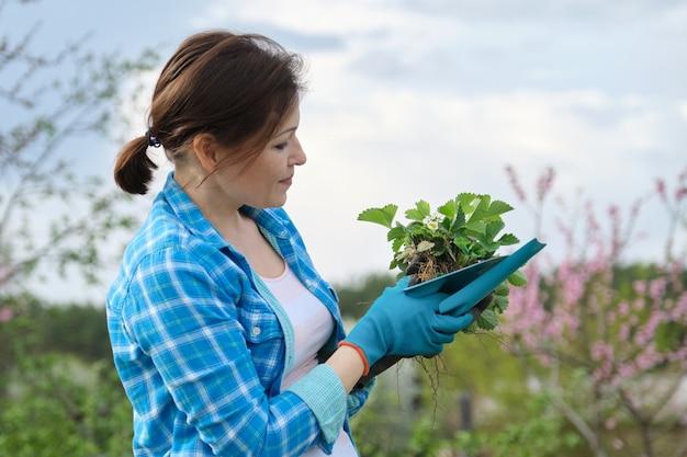 Mujer en guantes con herramientas de jardín con arbusto de fresa