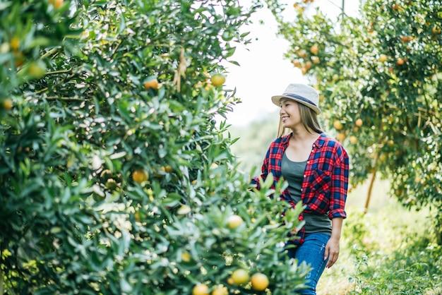 Mujer havesting plantación de naranja