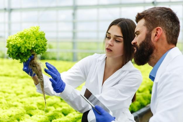 La mujer y el hombre en batas de laboratorio examinan cuidadosamente las plantas en el invernadero