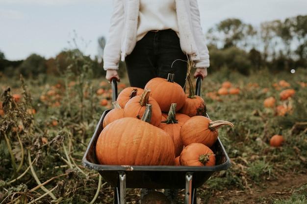 Mujer en un huerto de calabazas antes de halloween