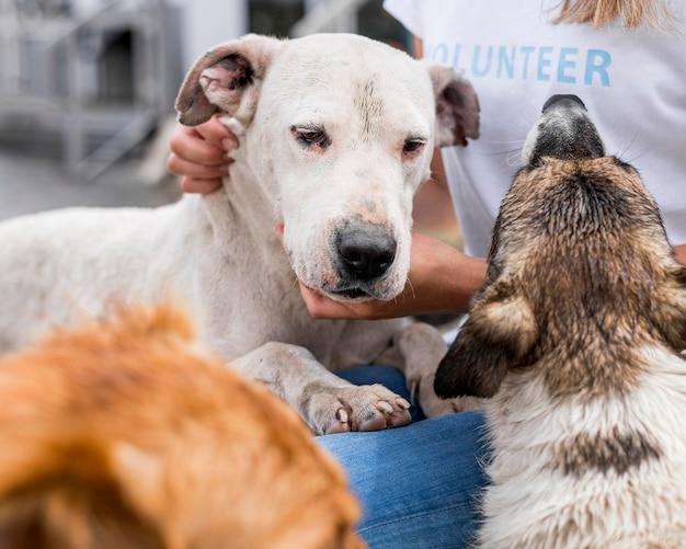 Mujer interactuando con perros de rescate en el refugio