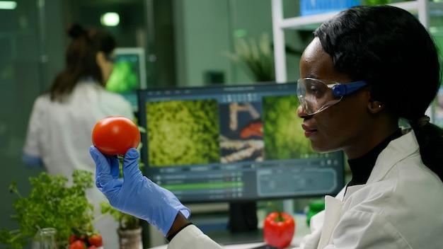 Mujer investigadora científica comprobando el tomate inyectado con pesticidas para la prueba de omg en segundo plano.