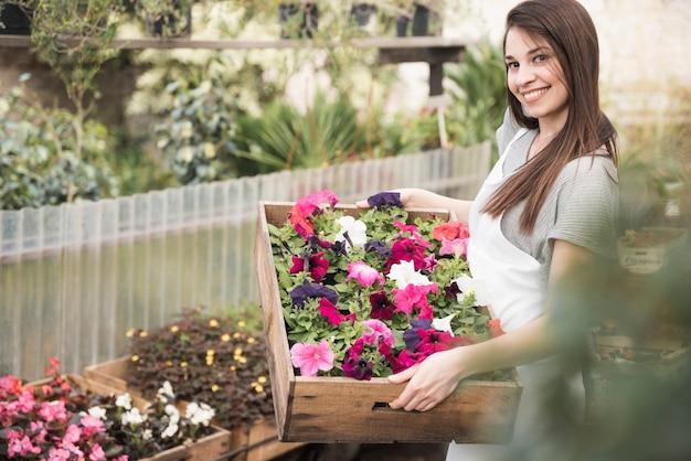 Una mujer joven atractiva que muestra arbolitos de petunias de colores en caja de madera