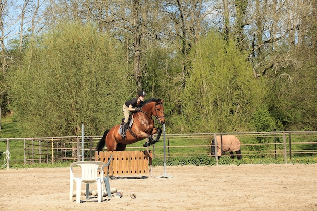 Mujer joven con un caballo marrón salta un obstáculo