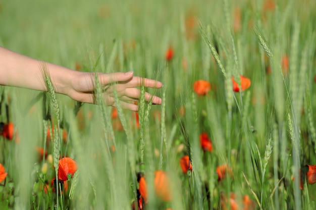 Mujer joven caminando en el campo de trigo verde en día de verano primer plano de la mano