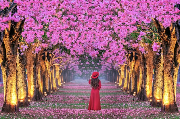 Mujer joven caminando en filas de árboles de hermosas flores rosadas.