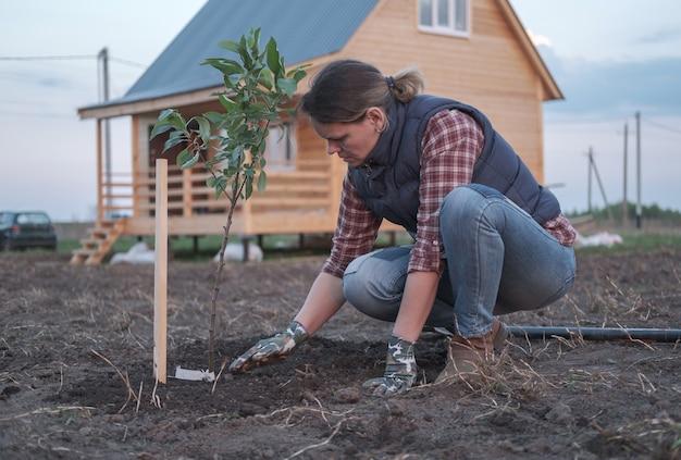 Una mujer joven plantando un manzano en el jardín cerca de la casa. plantar plántulas de árboles frutales en la primavera.