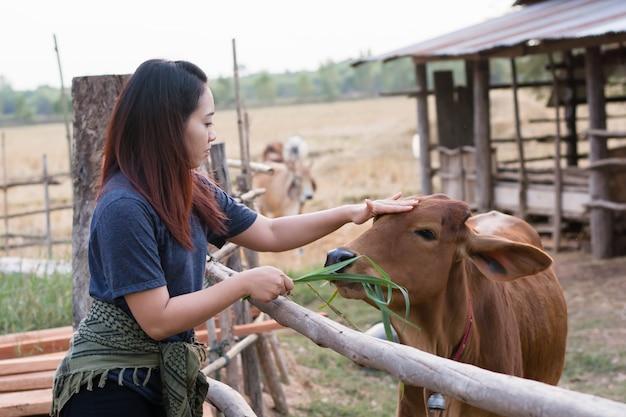 Mujer joven que alimenta vacas con la hierba en el establo en la granja tailandesa