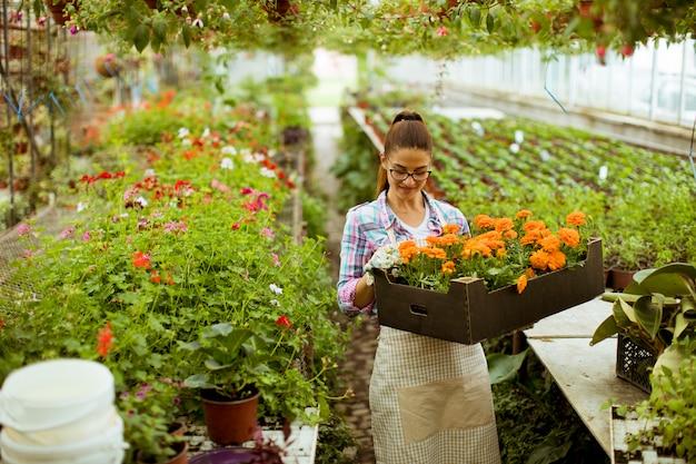 Mujer joven que sostiene una caja llena de flores de primavera en el invernadero