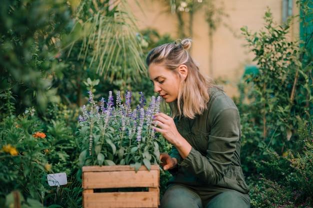 Mujer joven rubia que huele las flores de lavanda en la caja