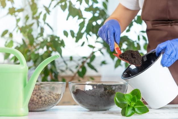 Una mujer joven trasplanta plantas en otra maceta en casa. herramientas de jardinería para el hogar.