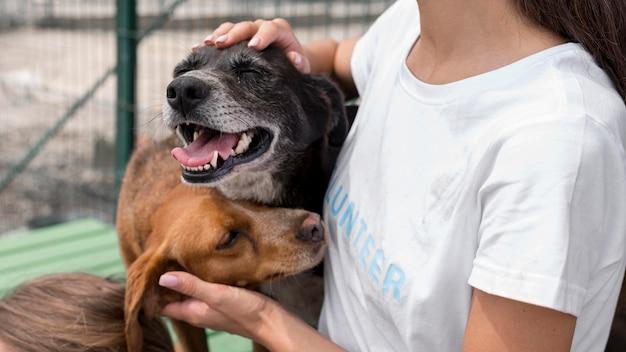 Mujer jugando con perros de rescate de cura en el refugio