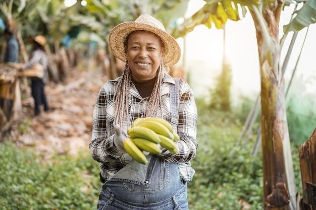 Mujer mayor agricultor africano que trabaja en el jardín mientras sostiene un racimo de plátanos