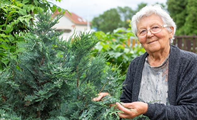 Mujer mayor o abuela cuida de su jardín, concepto de jardinería, pensionista