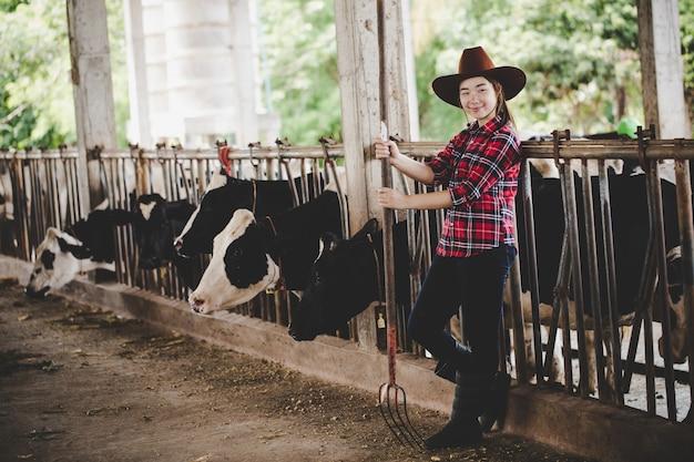 Mujer o granjero asiática hermosa con y vacas en establo en la granja lechera.