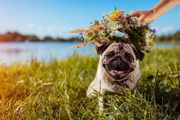 Mujer pone corona de flores en la cabeza de perro pug por río. feliz cachorro relajarse al aire libre