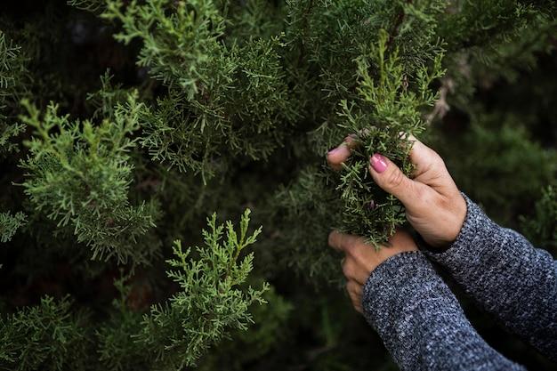 Mujer de primer plano con árbol de navidad