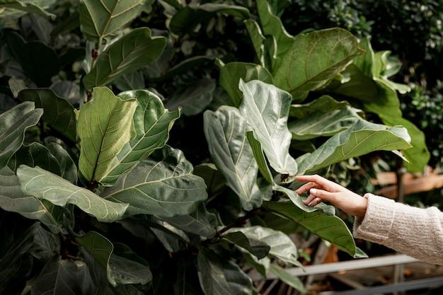 Mujer de primer plano tocando hojas verdes