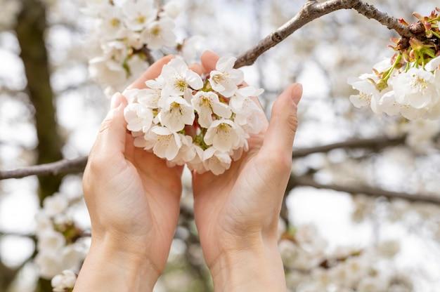 Mujer del primer que sostiene las flores del árbol en manos