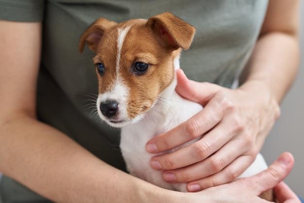 Mujer que juega con su perro de perrito de jack russell terrier. buenas relaciones y amistad entre el dueño y la mascota animal.