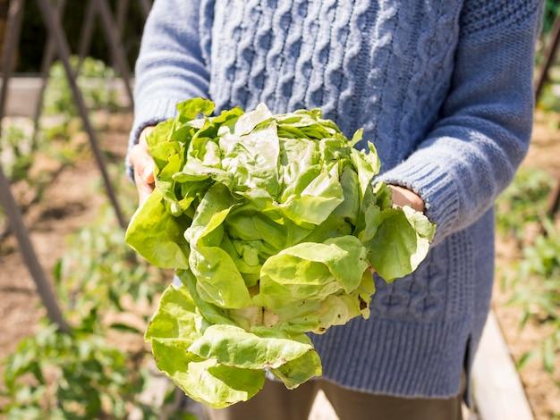 Mujer que sostiene la col verde fresca en su primer de las manos