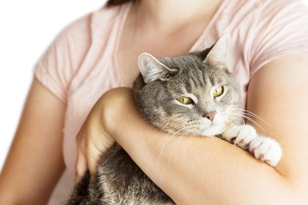 Mujer que sostiene el gato rayado gris en las manos. gato gris y veterinario