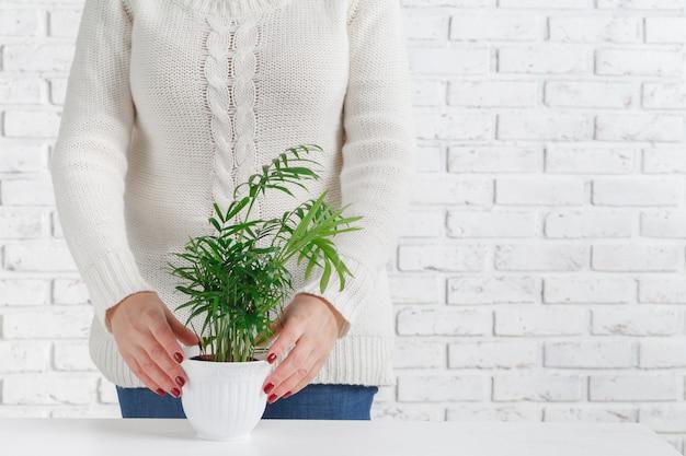 Mujer que sostiene la planta de la casa
