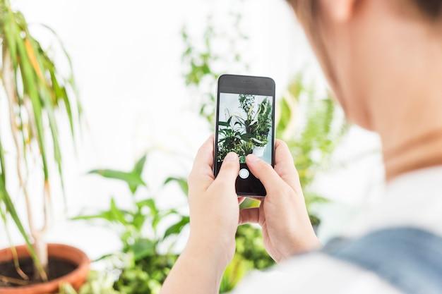 Mujer que toma la fotografía de la planta en maceta en el teléfono móvil