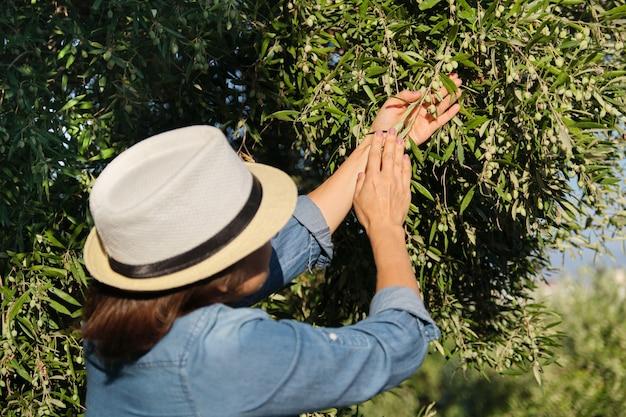Mujer que trabaja en el soleado jardín de olivos,